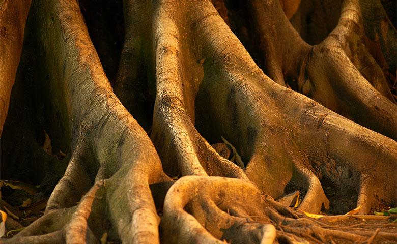 tree roots in tarrant county