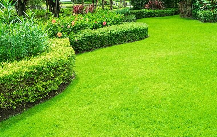green lawn with shrubs and flowers