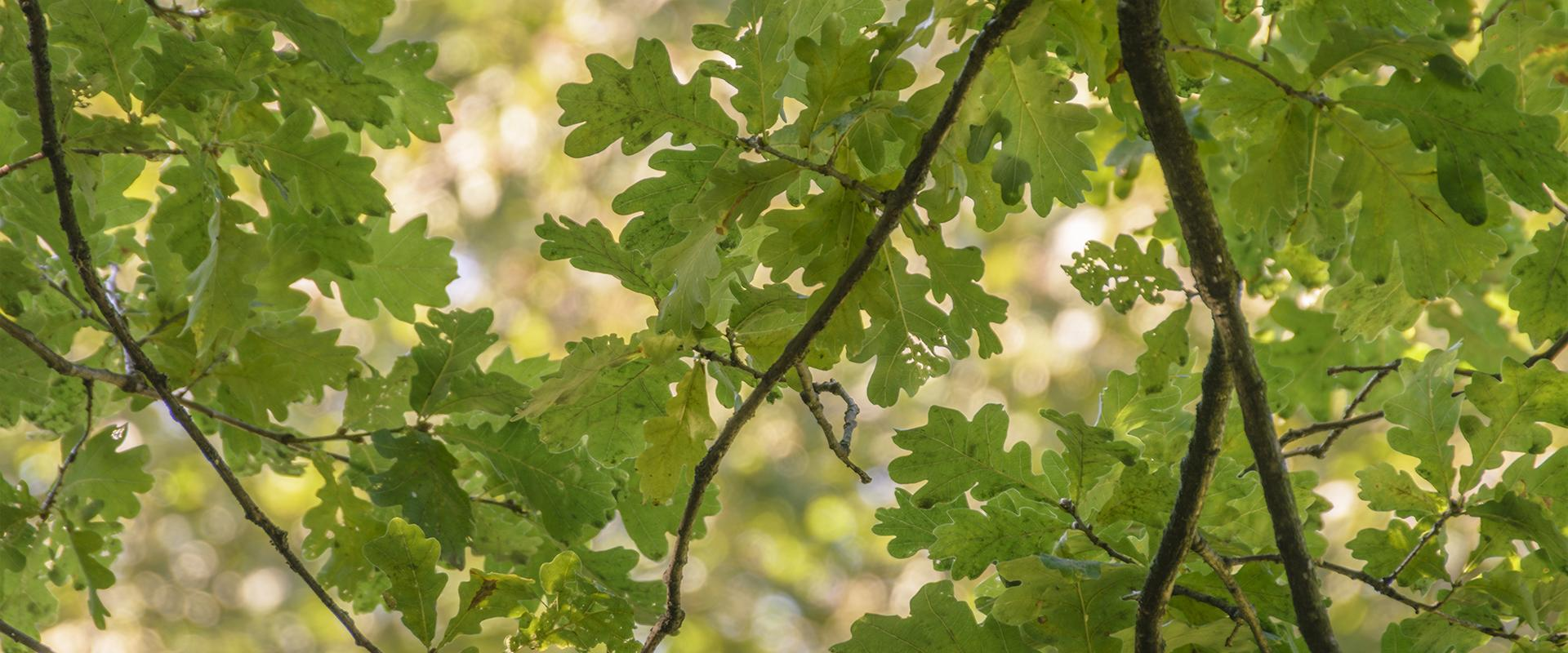 leaves on a tree in tarrant county