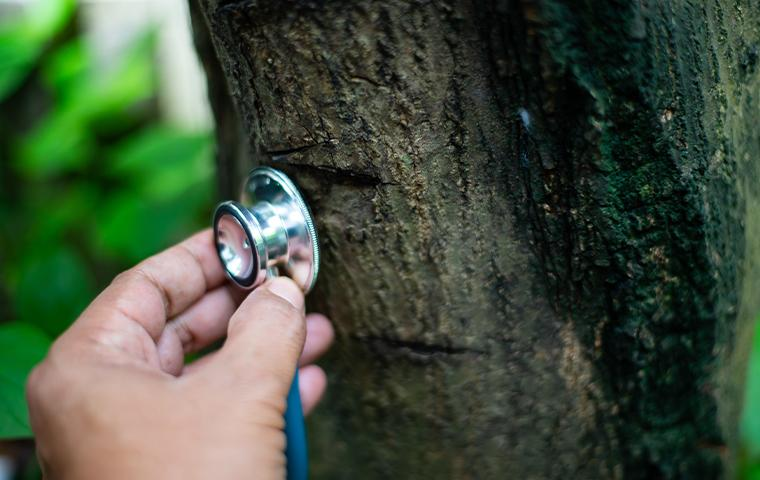 a stethoscope being held up to a tree in tarrant county