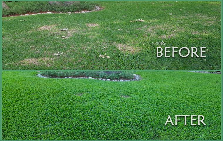 before and after shot of treated grass in tarrant county
