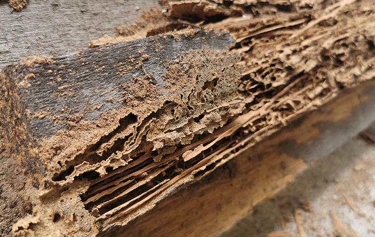 termite damage on wood