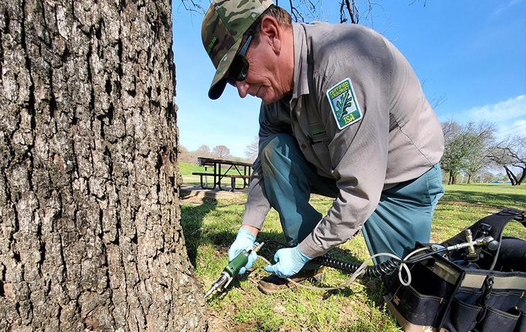 technician treating a tree in tarrant county