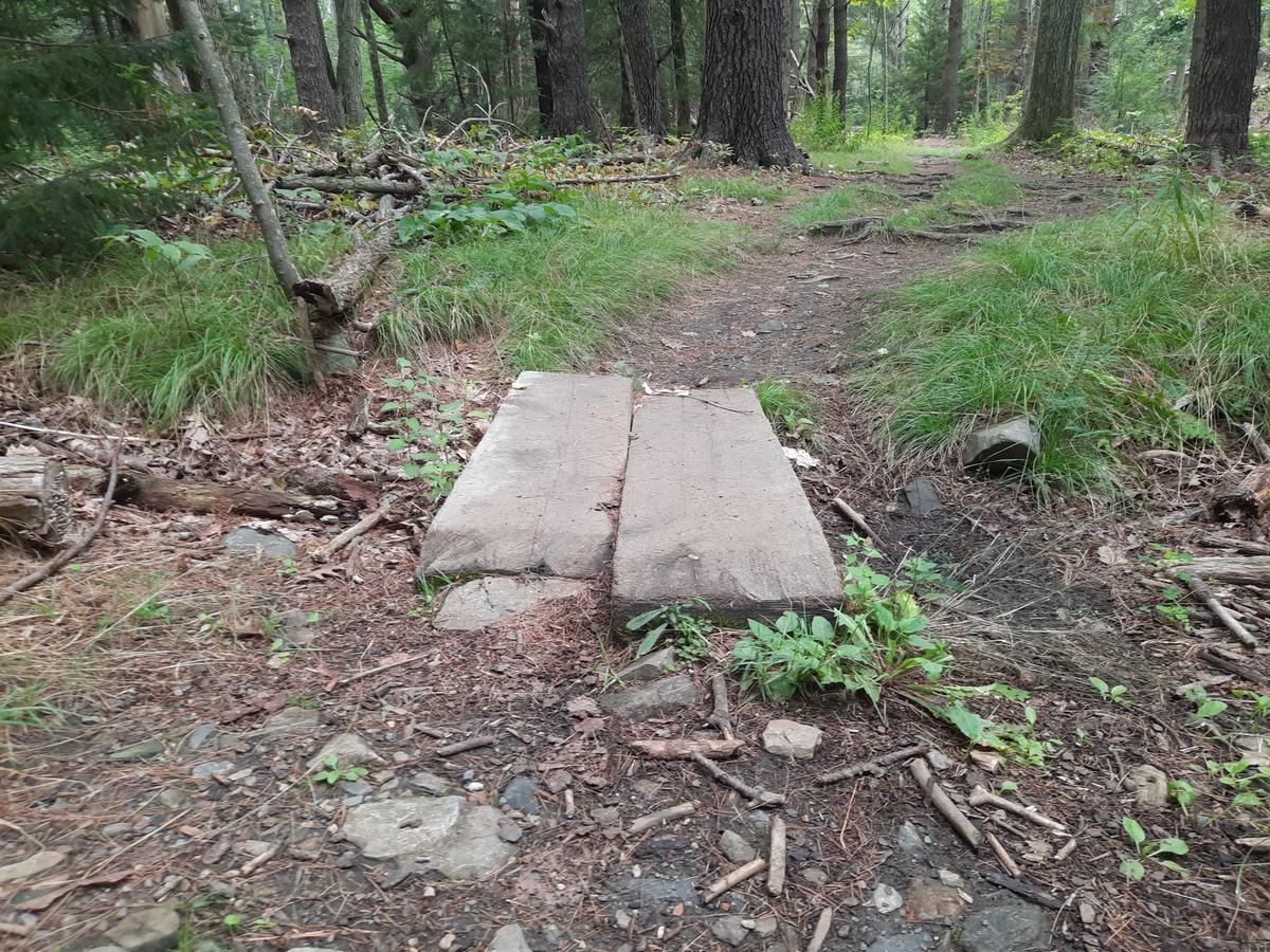 A short bog bridge made from hewn logs.