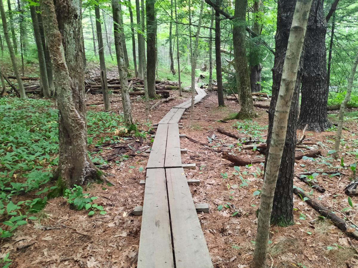 A very long bog bridge travels into the woods.