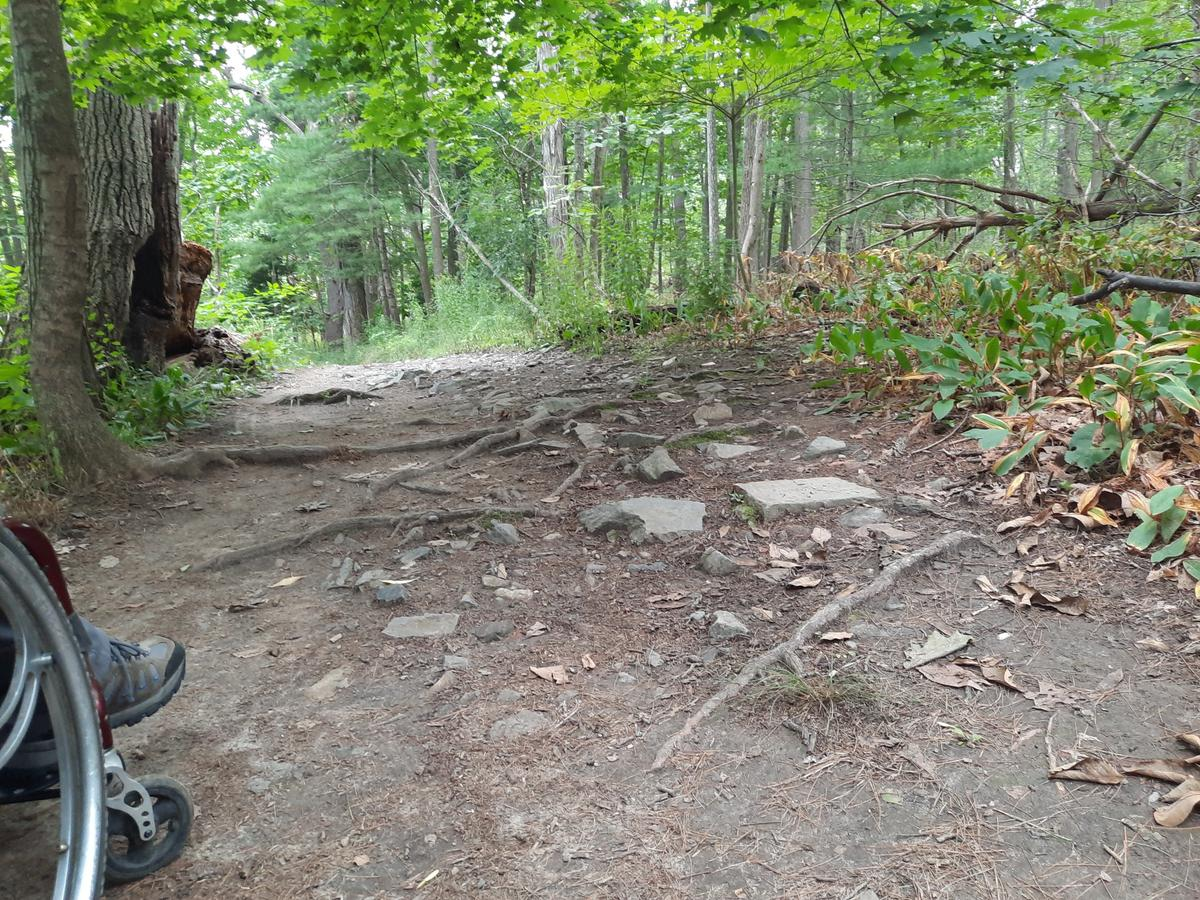 A section of trail with some roots and rocks.