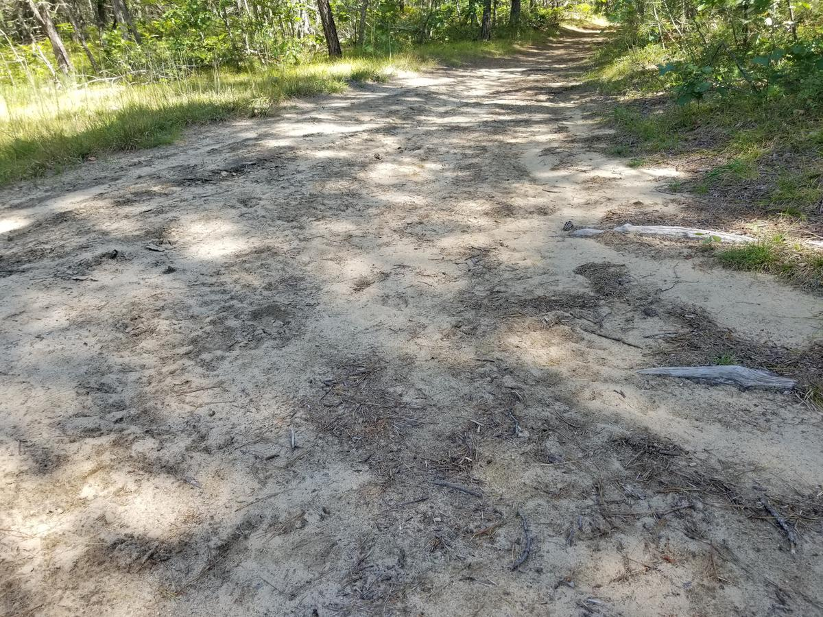 Sandy section of the White Trail. Photo credit: Enock Glidden