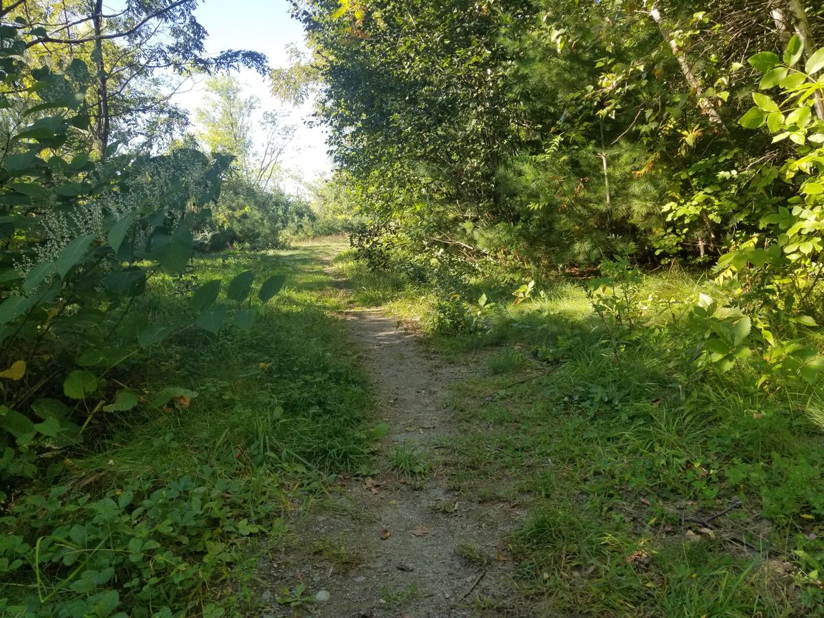 A section of trail with narrow treadway surrounded by grass.