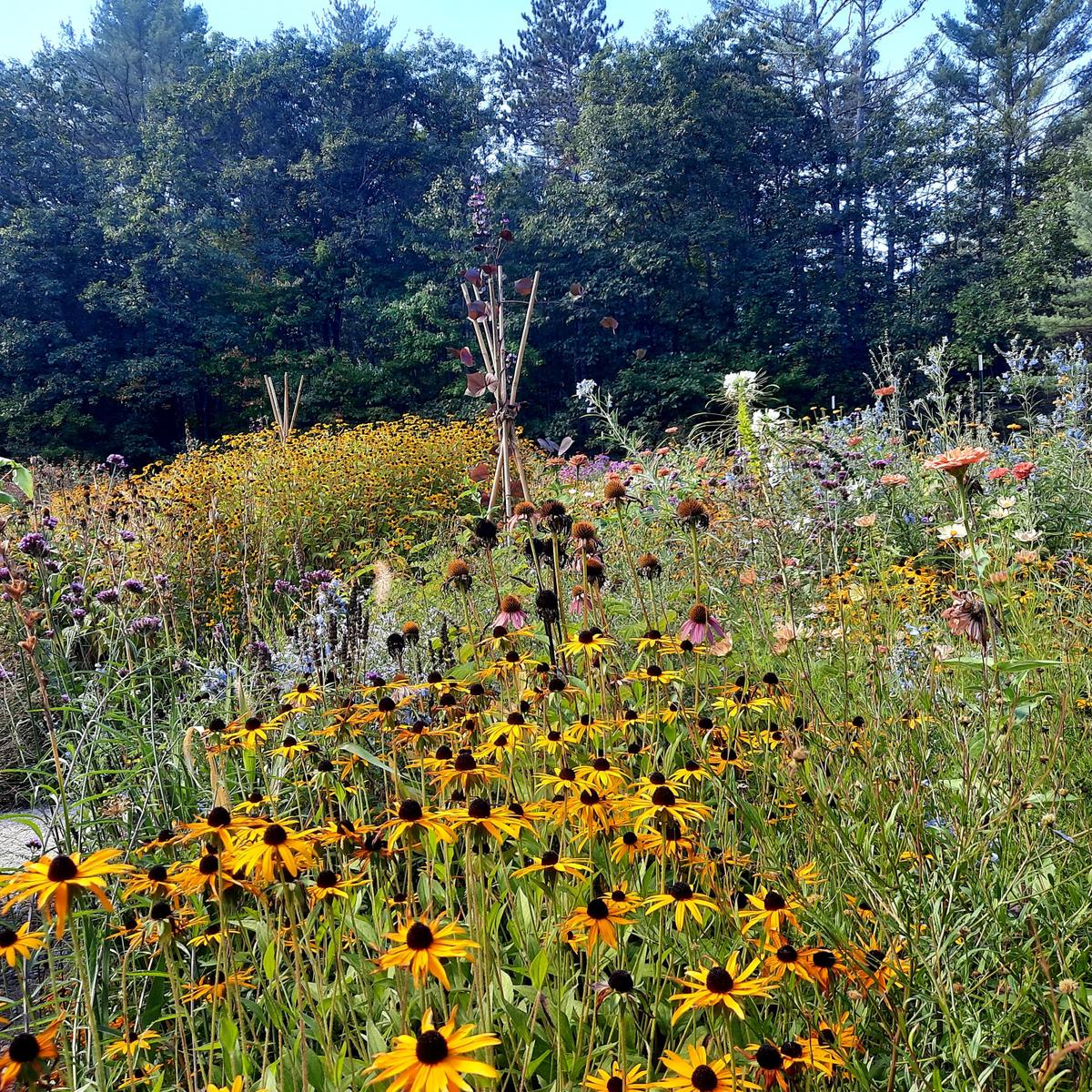 The pollinator garden at Valentine Farm. Photo credit: Enock Glidden