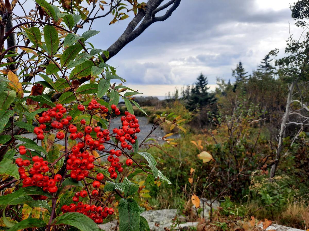 One last photo from Bog Brook - Moose Cove! Photo credit: Enock Glidden