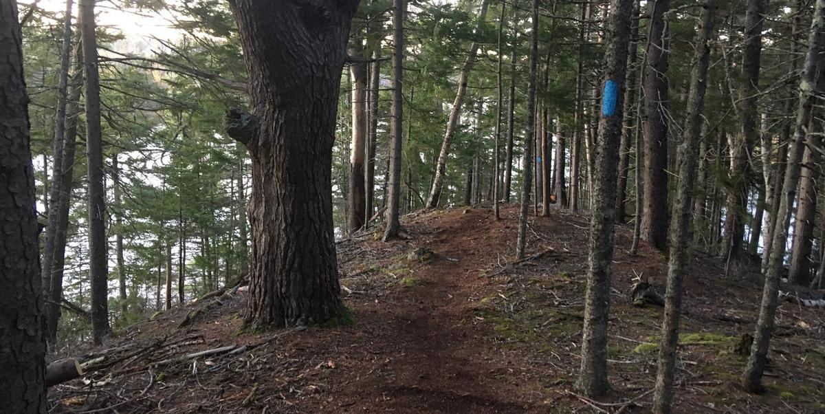 New trail at Jordan Homestead, a Frenchman Bay Conservancy preserve