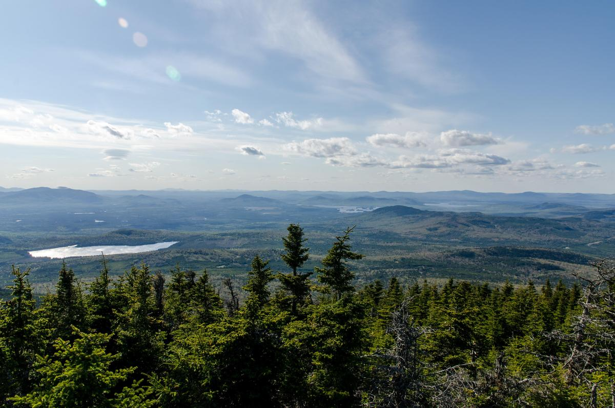 Look north across the Krummholtz and you can almost the boreal forest (you can certainly see Canada!). Coburn Mountain, Upper Enchanted Township.