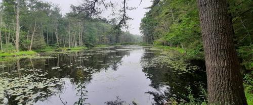 Enock's Adventures: Robinson Woods Preserve