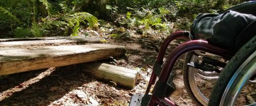Enock's Adventures: Alewive Woods Preserve