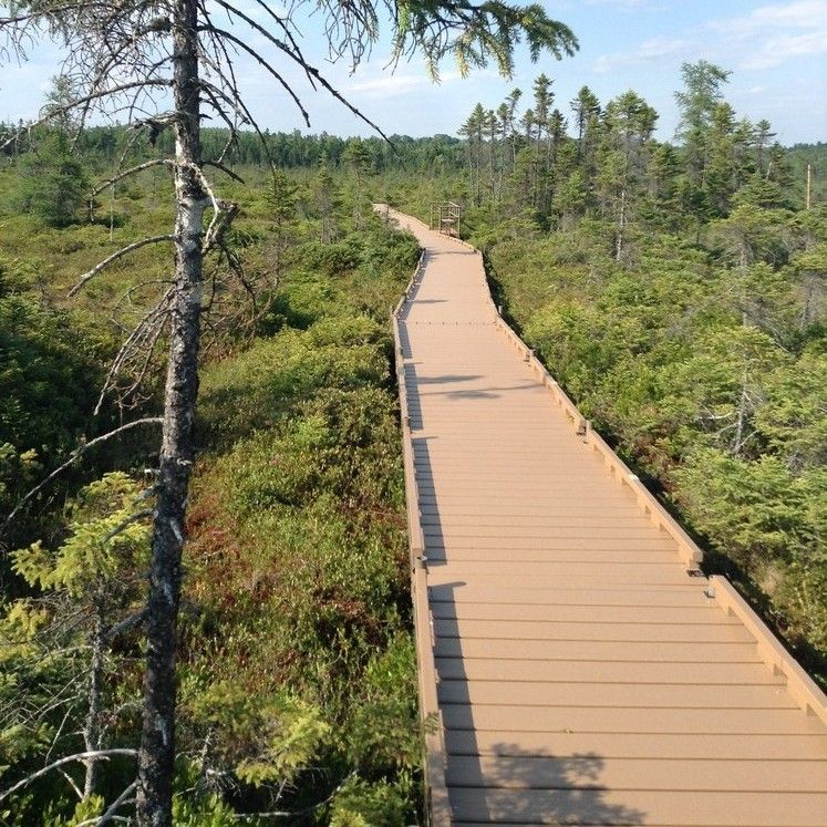 A wide boardwalk made of composite goes into a bog