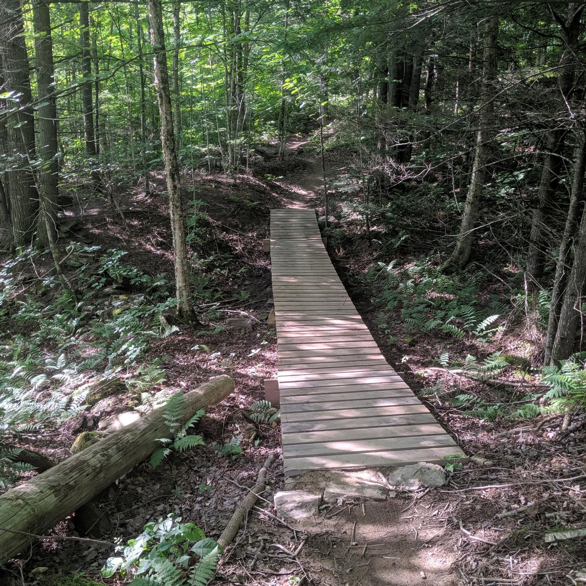 A 3 feet wide wooden boardwalk crossed over a low and wet section of trail