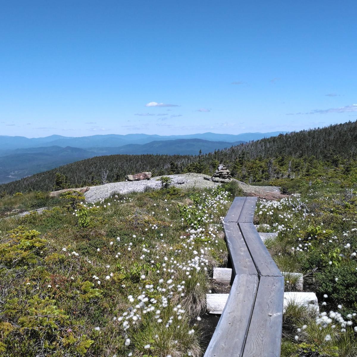 A bog bridge two boards wide goes across an alpine bog