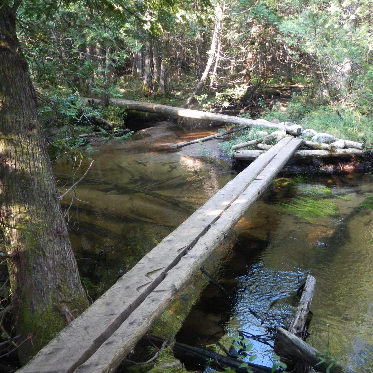 A narrow bridge of two boards crosses a stream