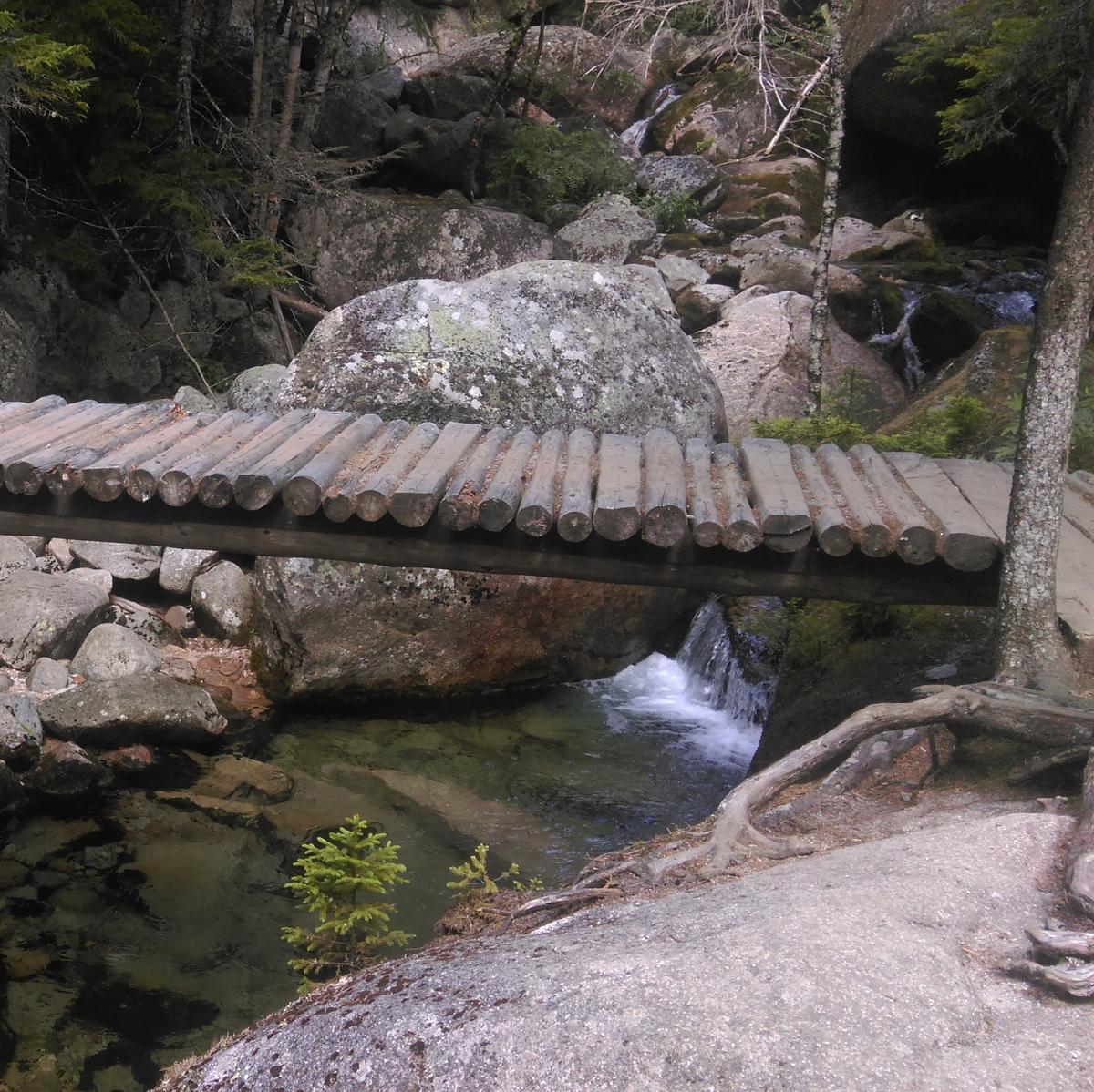 A bridge made of small diameter logs crosses a stream
