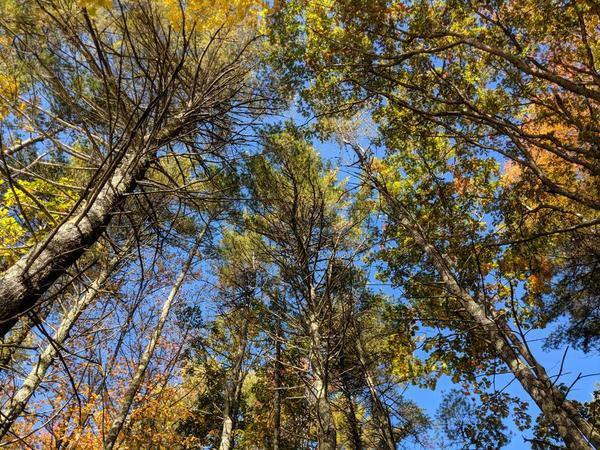 Welcoming Change! Forest Bathing/Forest Therapy Guided Walk!
