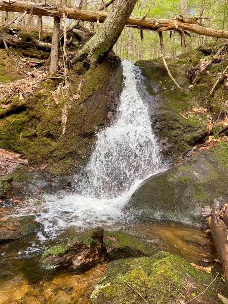 Community Forest Guided Hiking Tour