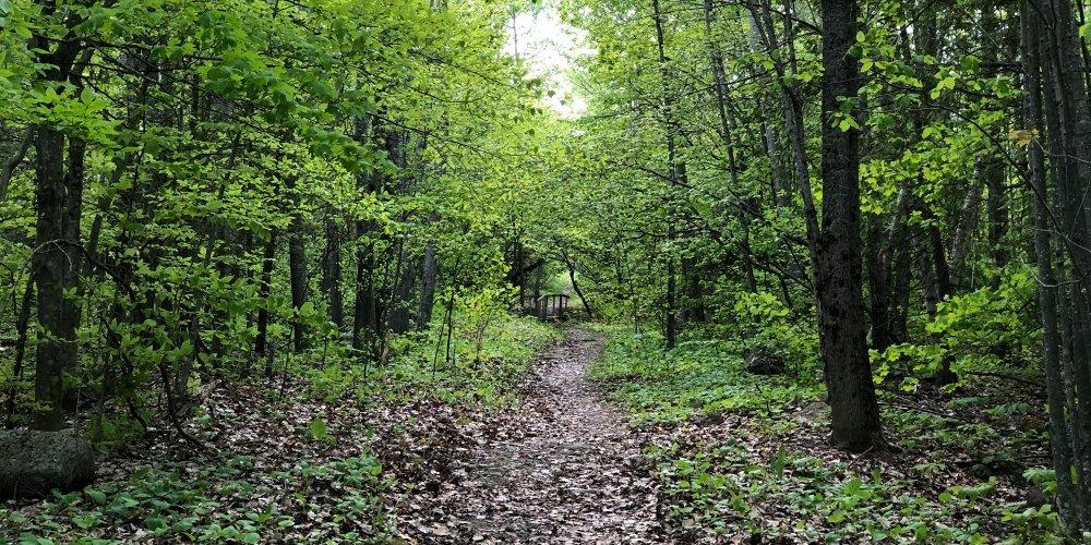 Essex Woods in Summer, Photo credit David Pena
