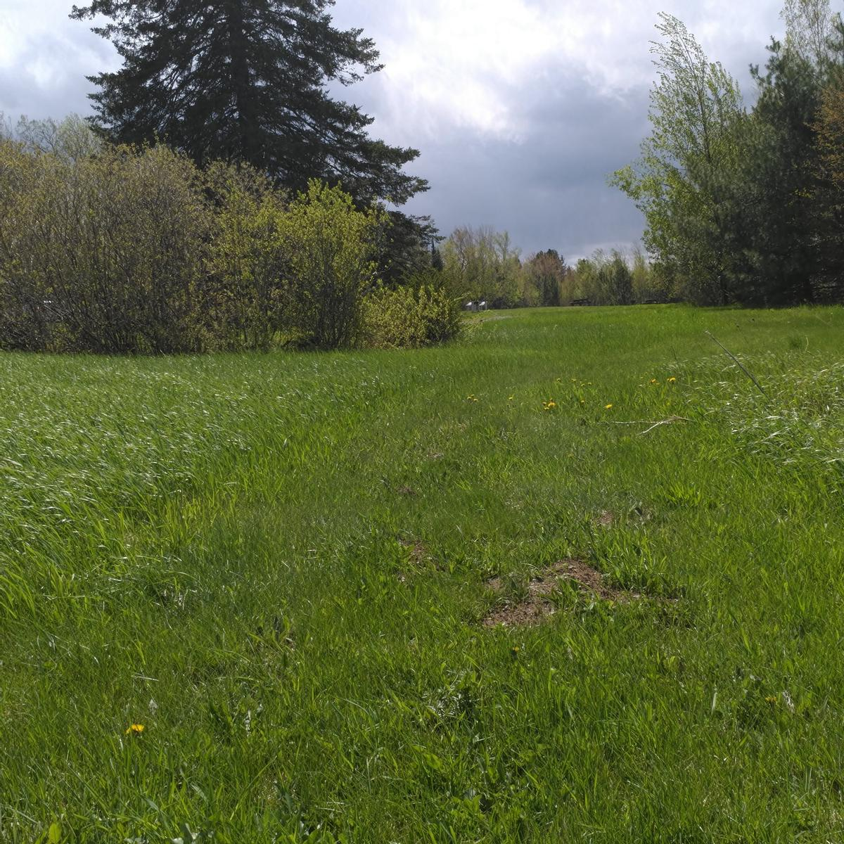 It is difficult to distinguish the trail in a mown lawn