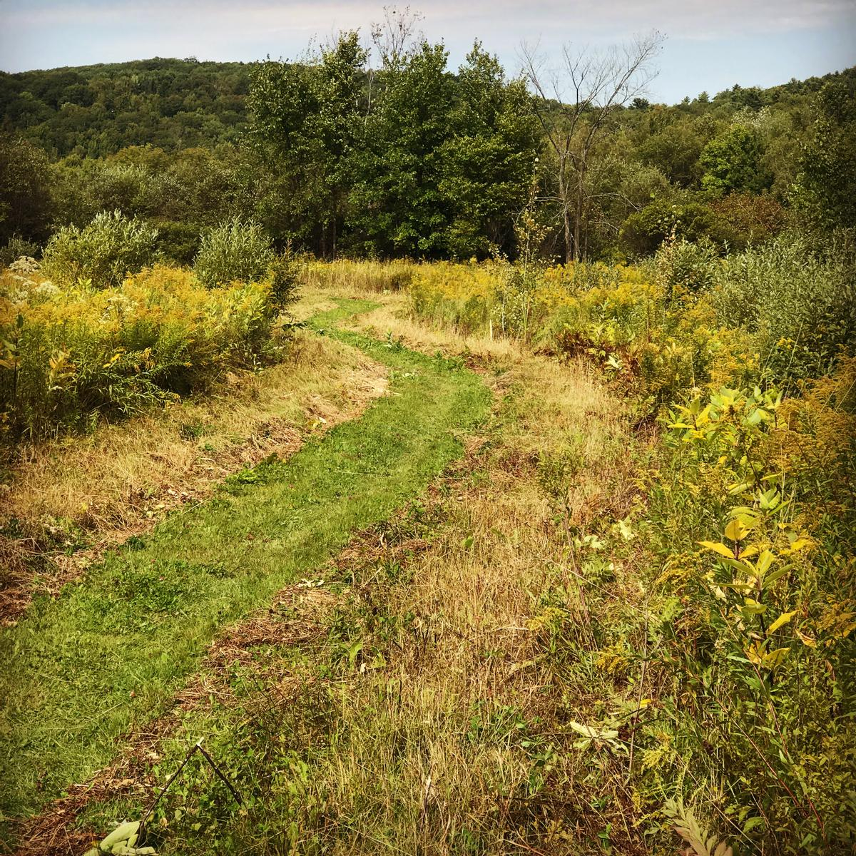 A recently mowed path shows where the trail goes through a field of wildflowers