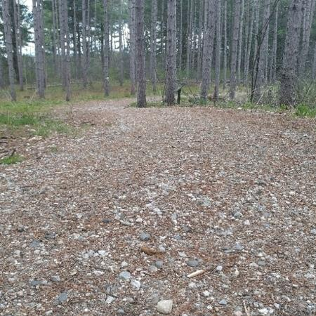 A trail surfaces with pea-sized gravel and detritus from trees