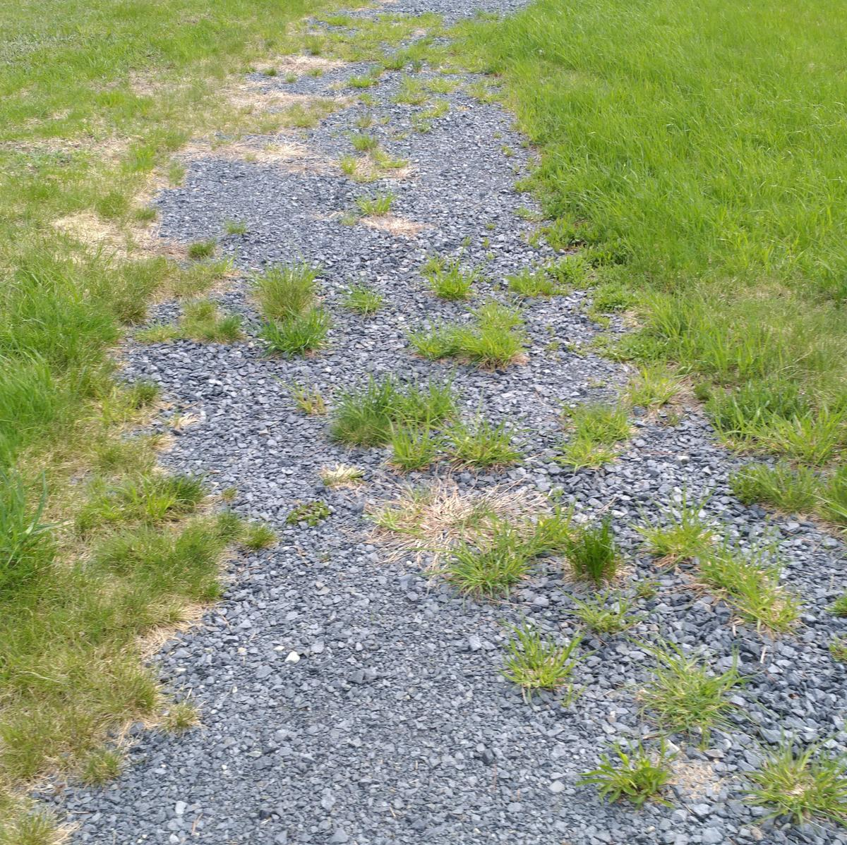 Gravel surface with grass encroachment