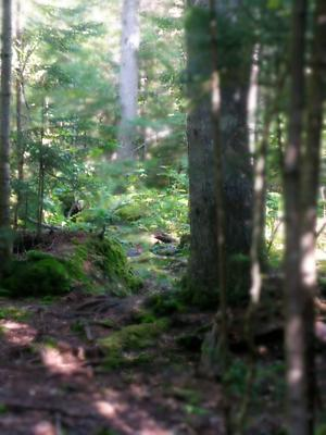 Second Sunday Nature Walks