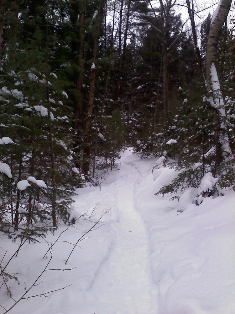 Snowshoe only trails (Credit: Maine Bureau of Parks and Lands)