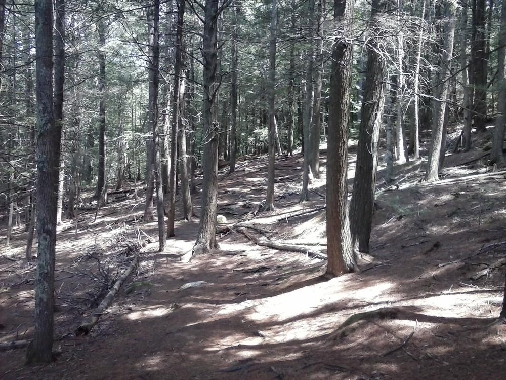 Harraseeket Trail (Credit: Chris Nason)