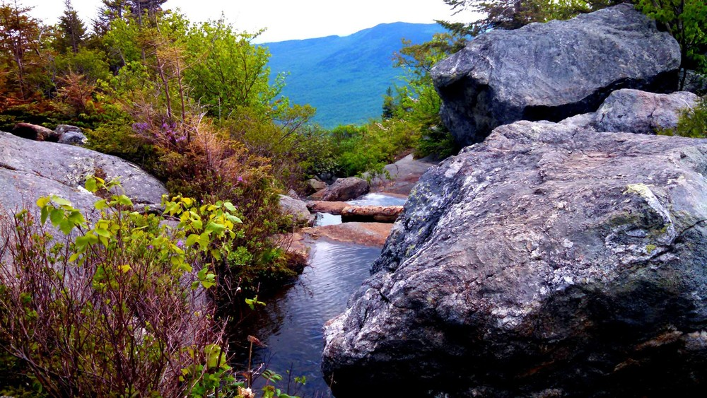 View from the top of Brook Trail before reaching the pond (Credit: Elizabeth MacMaster)