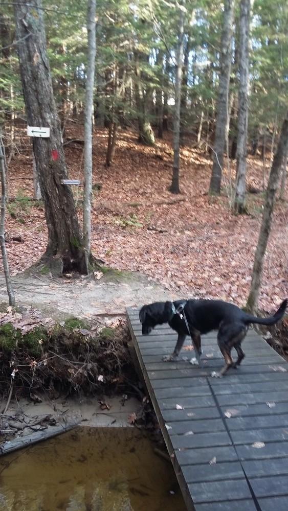Highlands Trails - Topsham