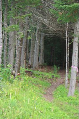 Eric's Trailhead (Credit: Nordic Heritage Center)