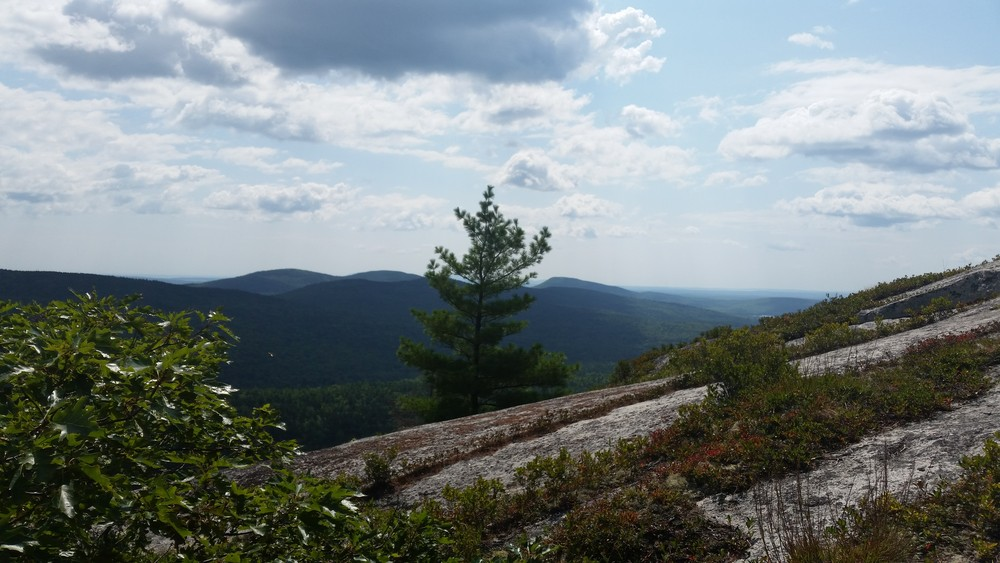 Tunk Mountain Summit, Southern View (Credit: Curtis Libby)