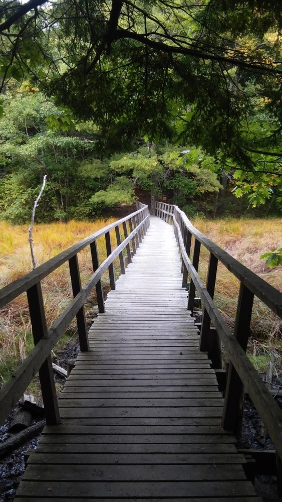 bridge (Credit: Kerry O'Neil)
