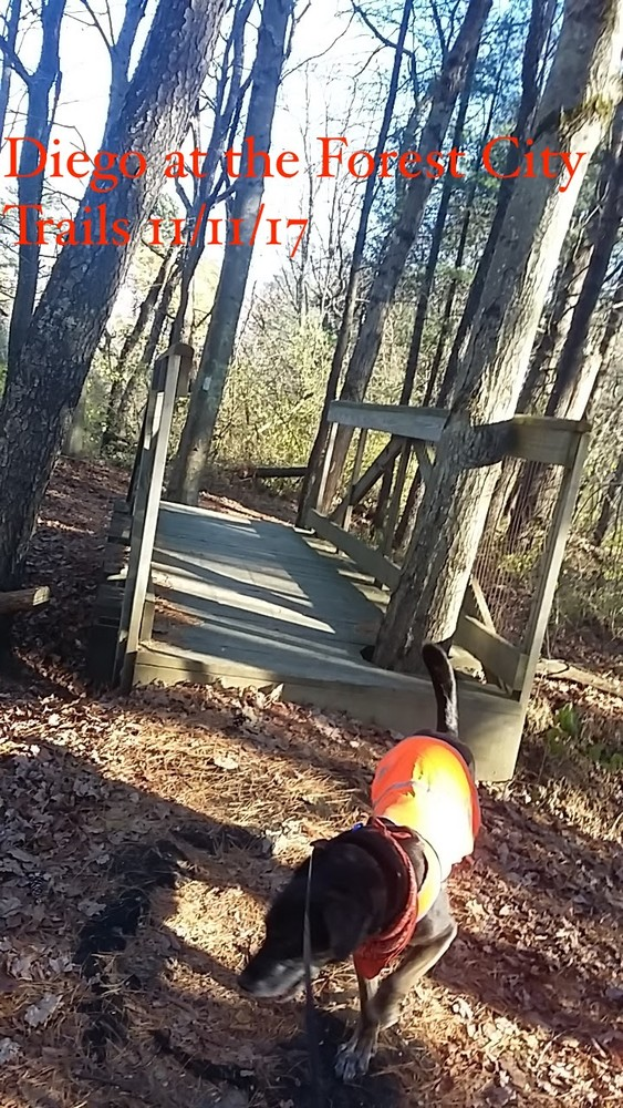 Forest City Trail