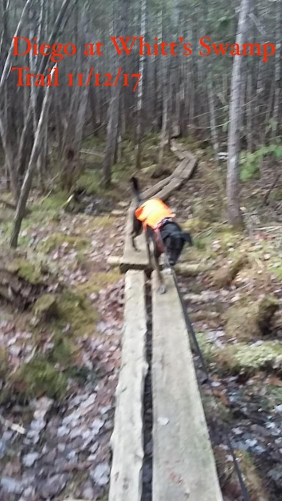 Witt Swamp Trail