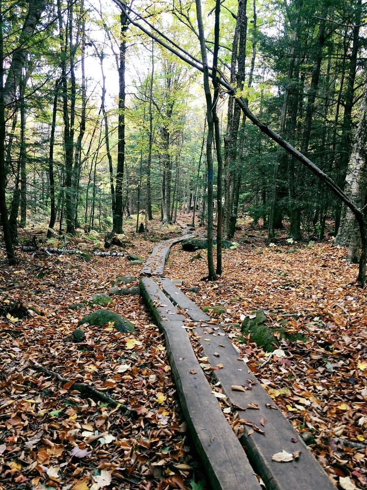 Trail Boardwalk (Credit: Robert Ratford)