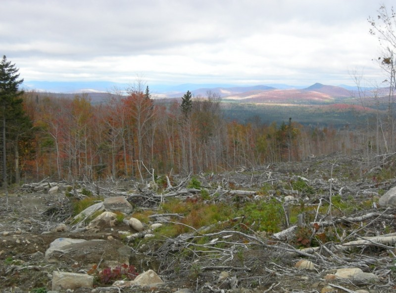 """Carlo Col Trail from Success Pond Road (New Hampshire) (Credit: C. """"Eeyore"""" Hitchcock)"""