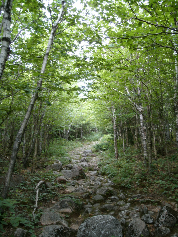 A. Murray Young Path Before Descent (Credit: National Park Service)