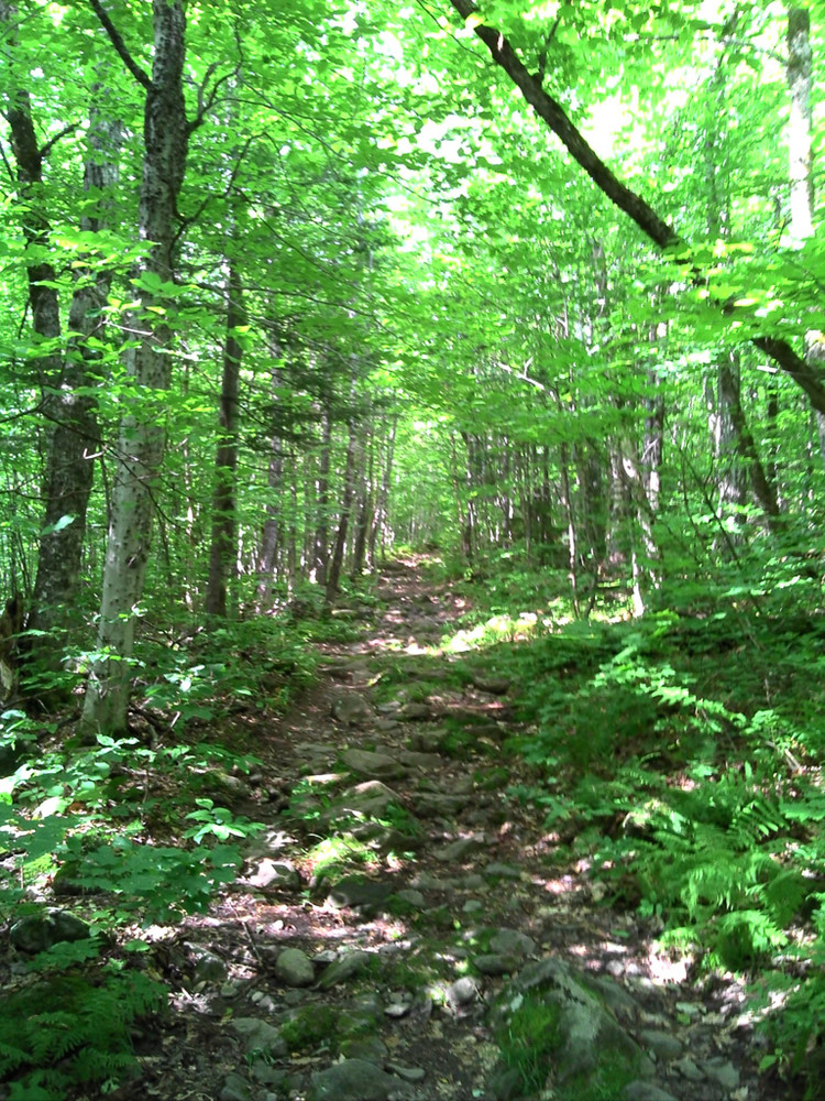Lower Section of Trail (Credit: Maine Bureau of Parks and Lands)