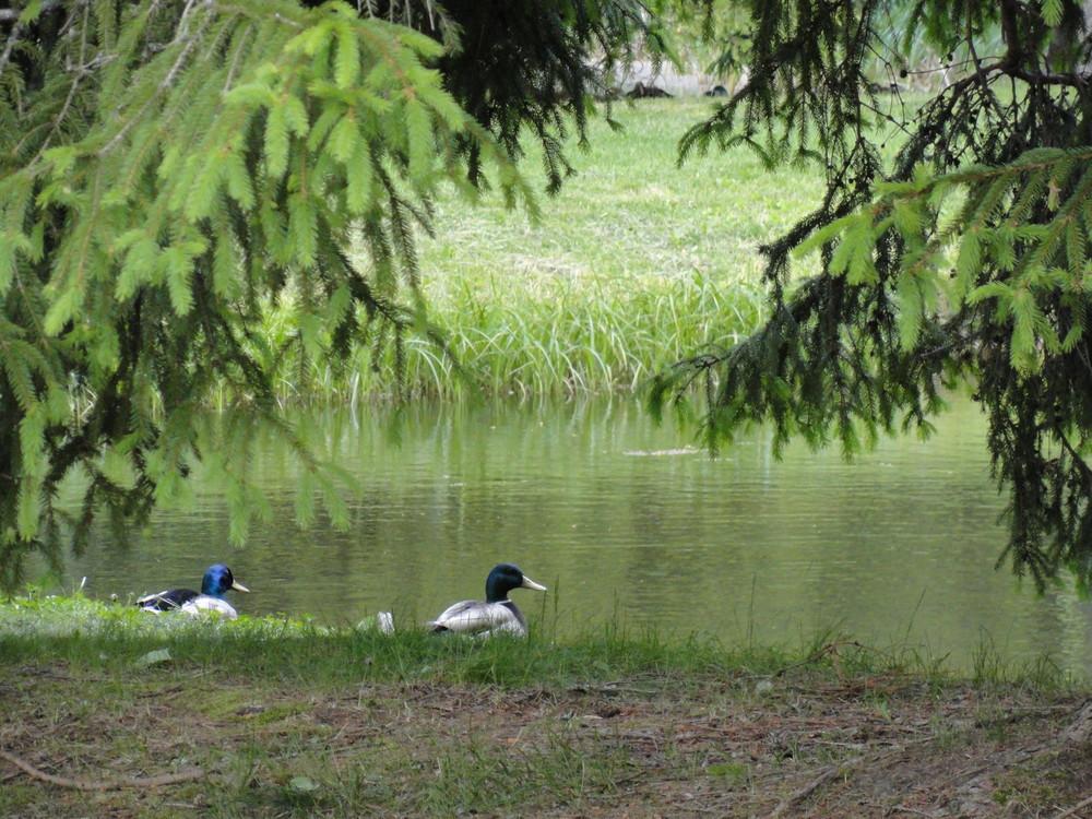 Duck Pond (Credit: Center for Community GIS)