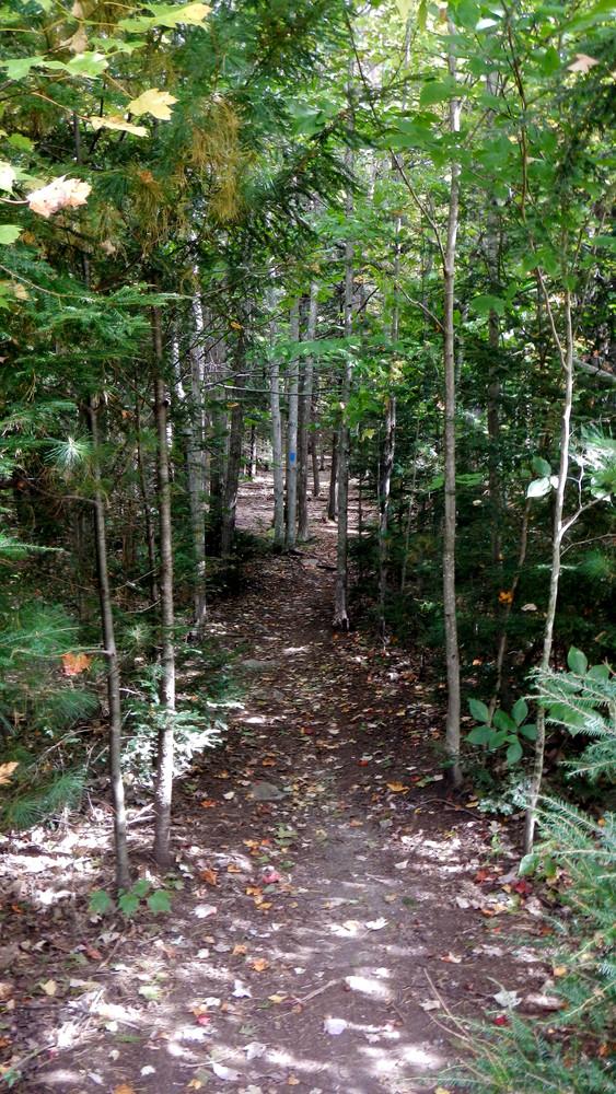 Trail (Credit: Alison DeGraff)