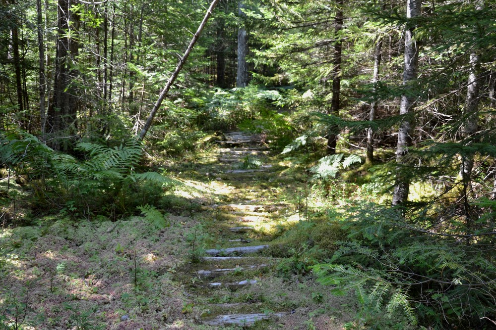 Remains of an old corduroy road in a lush section of trail (Credit: Maine Trail Finder)