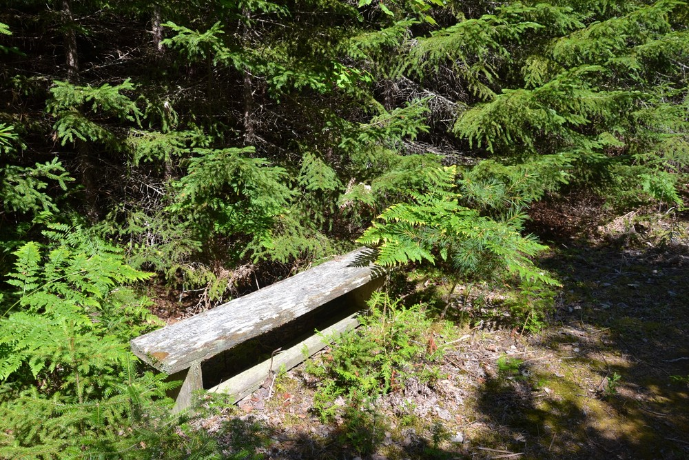 One of many benches along the trail (Credit: Maine Trail Finder)