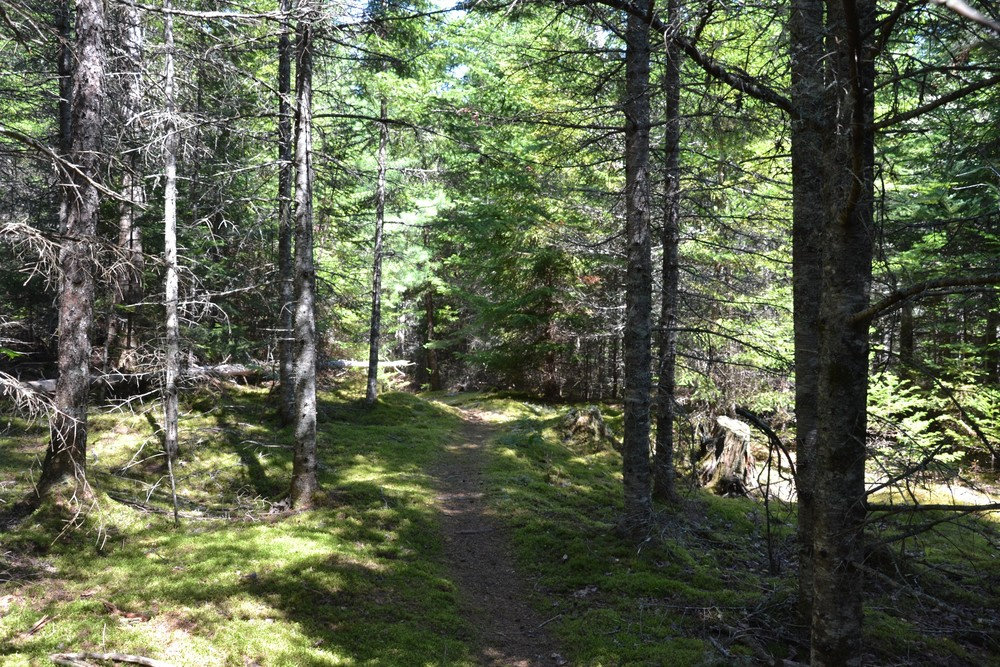 Narrower section of trail (Credit: Maine Trail Finder)