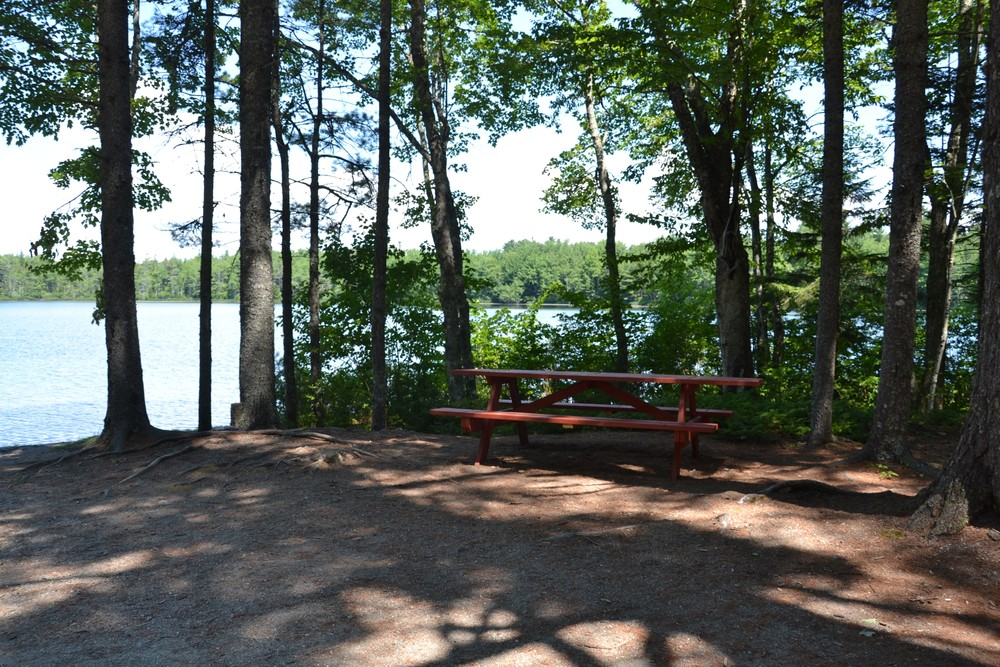 Shady picnic spot (Credit: Maine Trail Finder)